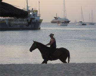 anguilla horse