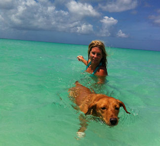 Anguilla Animal Rescue Foundation, pet rescue, puppy