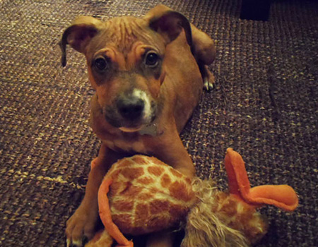 Anguilla Animal Rescue Foundation, pet rescue, Sandy, NYC