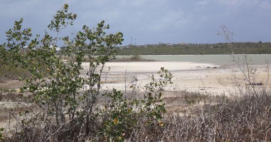 the salt pond behind cove bay, cove pond
