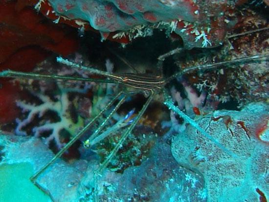 Anguilla diving, Special 'D' Diving, wreck dive