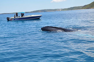 Dive, Anguilla, Douglas Carty, Special D' Diving, Whales