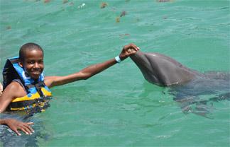 anguilla dolphin swim