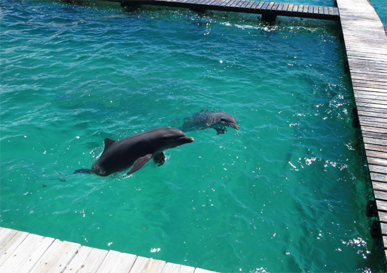 dolphin discovery anguilla