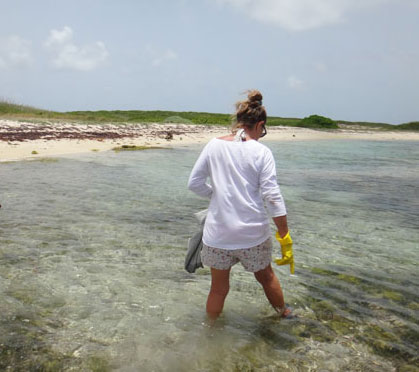 denise foraging for sea urchin in anguilla