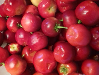 west indian cherries harvested by chef denise