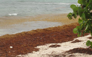 Anguilla, Sargassum seaweed, tropical storm aftermath