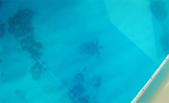 anguilla snorkeling