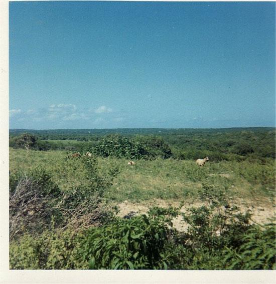 Anguilla Pasture 1969