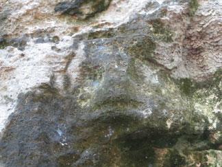 Big Spring Petroglyph Anguilla