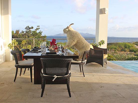 villa mascot billy enjoying the caribbean breeze