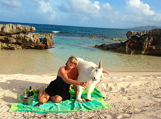 goat anguilla robin on the beach