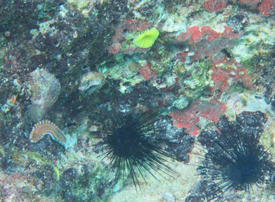 bristle worm and yellow feather duster