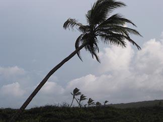 savannah bay caribbean real estate