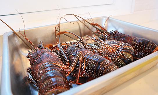 Fresh Crayfish
