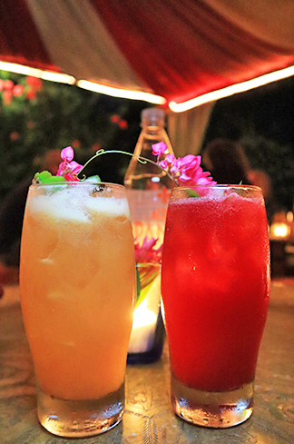 Bird of Paradise & Hibiscus Mule
