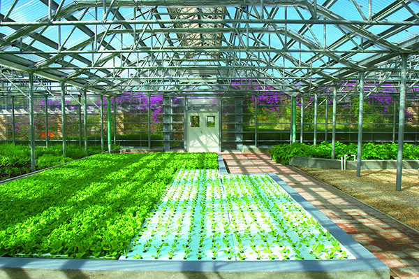 hydroponic garden greenhouse at cuisinart