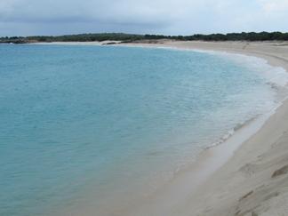 one bay on dog island