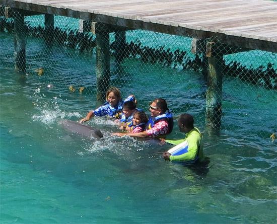 family dolphin swim anguilla