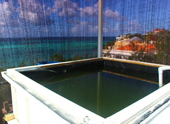 fish tank for anguilla jammin aquaponics