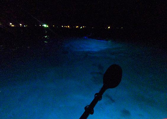Liquid Glow night kayaking in Island Harbour