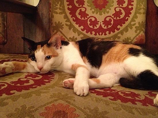 house cat at el convento