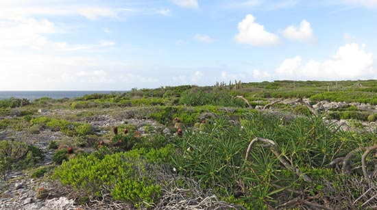 amerindian heritage site trail in anguilla
