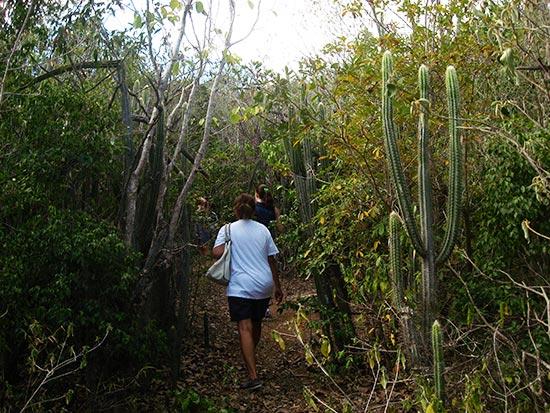 iguana cave anguilla