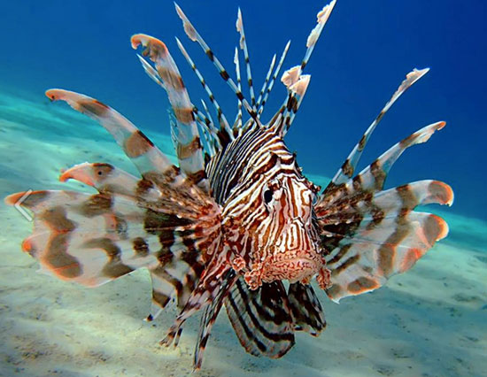 Anguilla, lionfish, Florida Sport Fishing