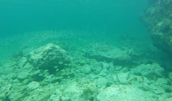 snorkeling by the beautiful rocks of little bay