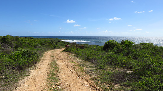 more atv driving in anguilla through the forest area