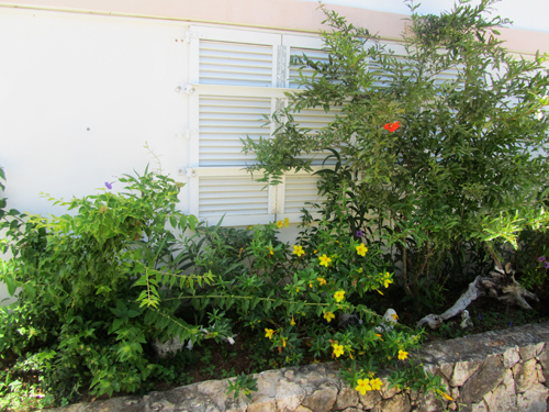 Anguilla rental home garden