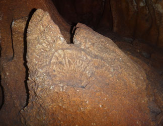 cave fossil seen during pure anguilla hike
