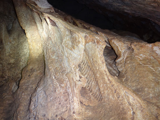 The Amblyrihiza inundata fossil inside katouche cave