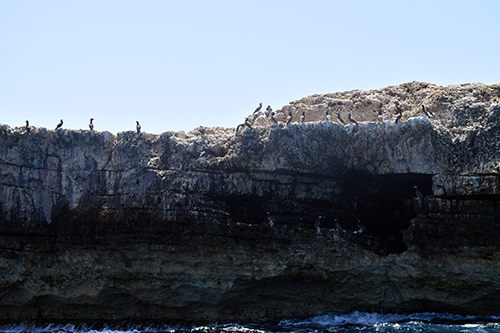 boobie birds sun bathing on cliffs of little scrub