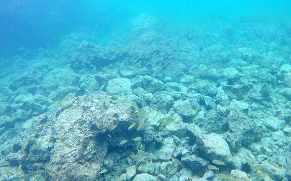 shoal bay scuba snorkeling at little bay