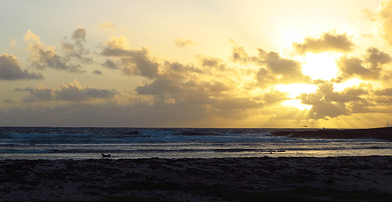 long pond bay at sunrise with nature explorers anguilla