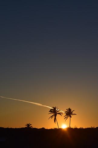 beautiful sunset at palm grove