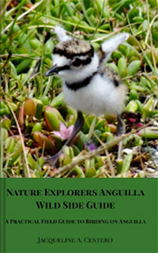 wild side guide anguilla books