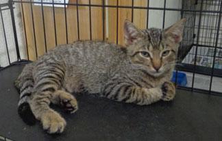 Anguilla Animal Rescue Foundation, pet rescue, kitten