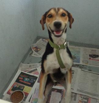 Anguilla Animal Rescue Foundation, pet rescue, Regal, Boston
