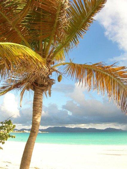 Anguilla beaches, Sargassum seaweed