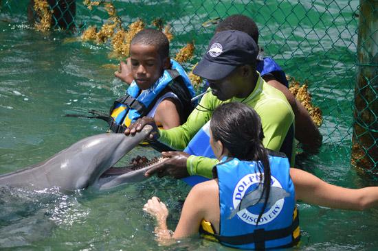 anguilla dolphin