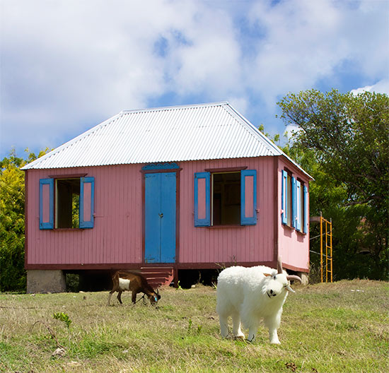 anguilla goats at the cottage