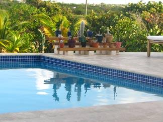 caribbean pool and cacti