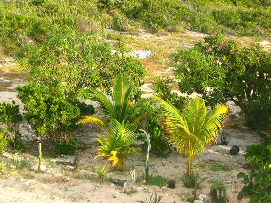 anguilla vegetation