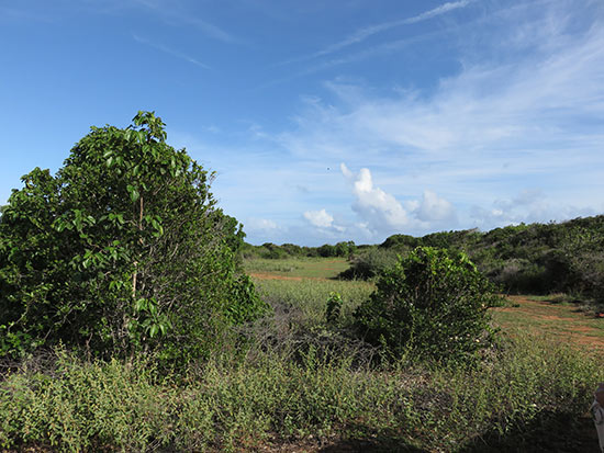 land used for cultivation in anguilla