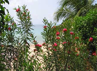 Anguillian beachfront view of Crocus