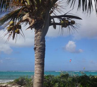 kitesurfing at prickly pear
