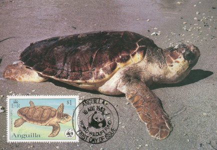 Anguilla leatherback turtle